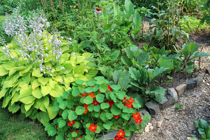 Garden w/Vegs & Perennials